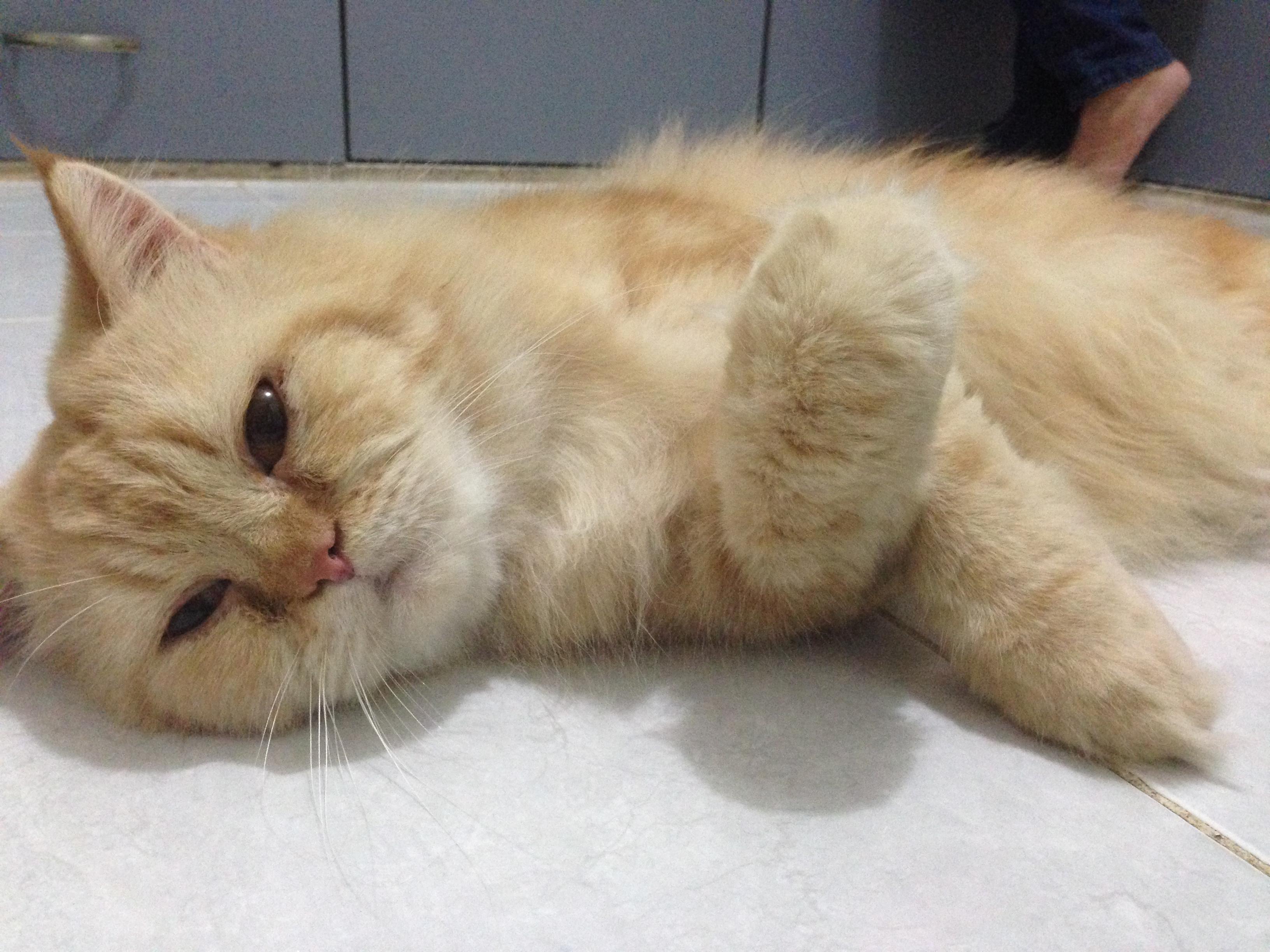 Cara Memandikan Kucing Di Rumah Dan Tips Chikanndcs